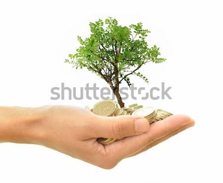 Fa növekvő pénz kéz tart kicsi Stock fotó © unikpix