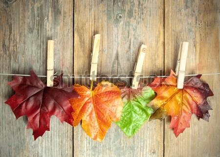 Autumn background Stock photo © unikpix