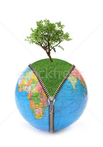 Stock photo: Tree and globe