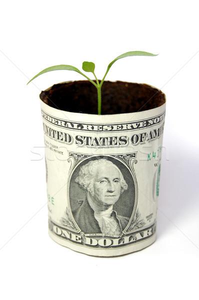 Money plant Stock photo © unikpix