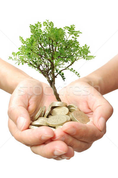 Pénzfa növekedés kicsi fa növekvő üzlet Stock fotó © unikpix
