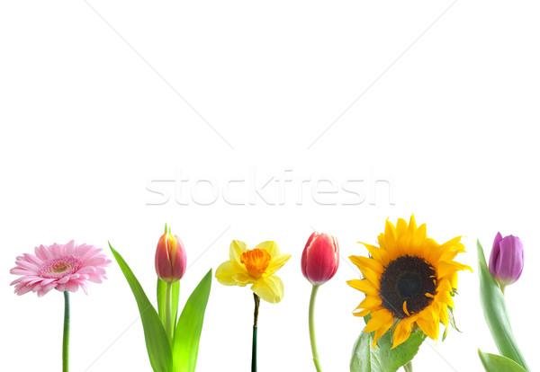 Сток-фото: весенние · цветы · границе · белый · цветок · цветы