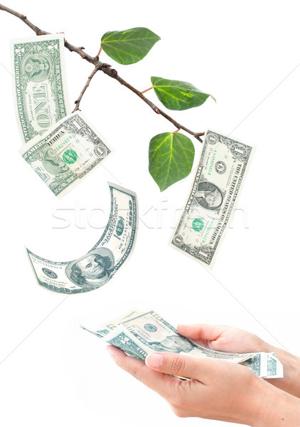 Money growing on tree Stock photo © unikpix