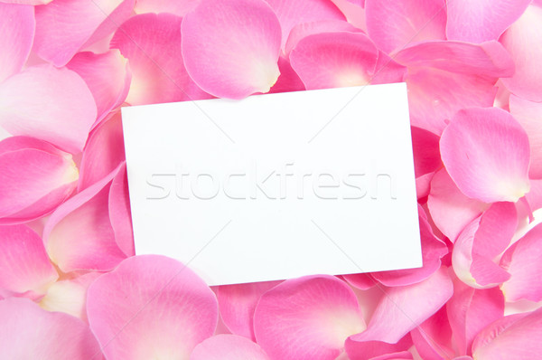 Boş kart güller pembe Paskalya doğum günü kart Stok fotoğraf © unikpix