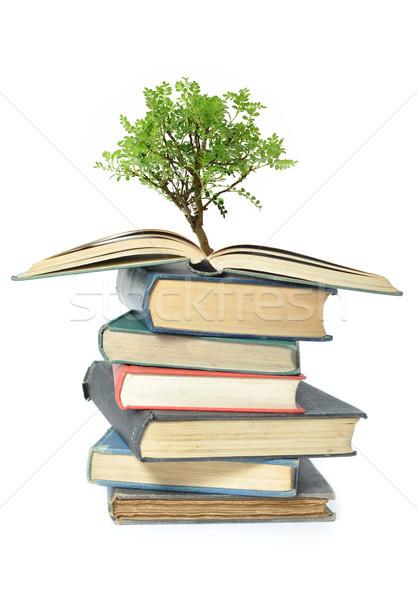 дерево растущий книга изолированный изображение открытой книгой Сток-фото © unikpix