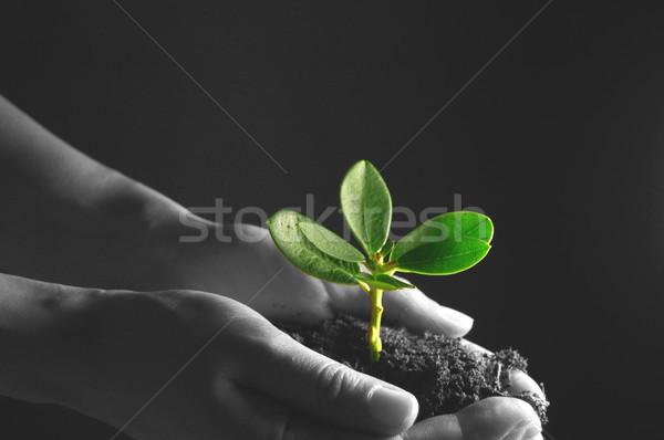 New growth Stock photo © unikpix