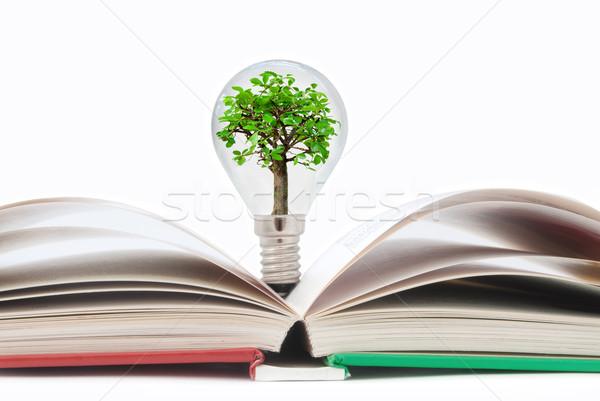 Stockfoto: Boek · gloeilamp · boom · Open · boek · klein · binnenkant