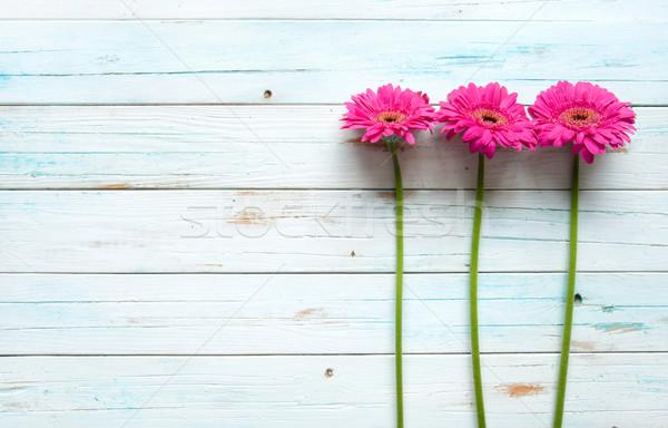 Yaz papatyalar ahşap uzay çiçek bahar Stok fotoğraf © unikpix