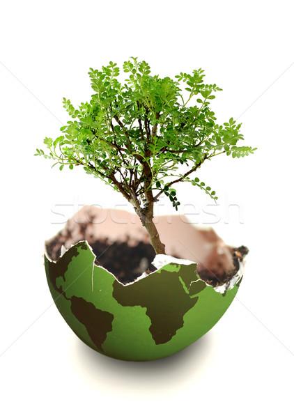 Fa növekedés Föld növekvő atlasz térkép Stock fotó © unikpix