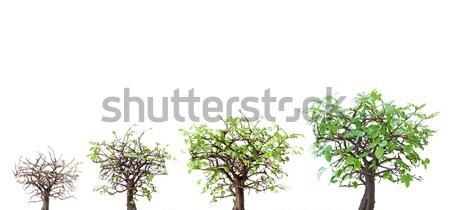 Ağaç evrim doğa sahne başarı Stok fotoğraf © unikpix