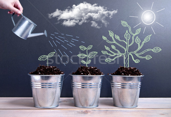 Tree growth phases  Stock photo © unikpix