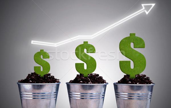 Dollar plant growth concept Stock photo © unikpix