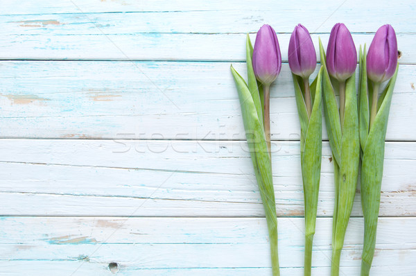 тюльпаны весны пространстве цветок древесины Сток-фото © unikpix