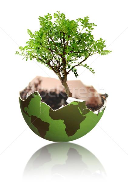 Tree growth from earth Stock photo © unikpix
