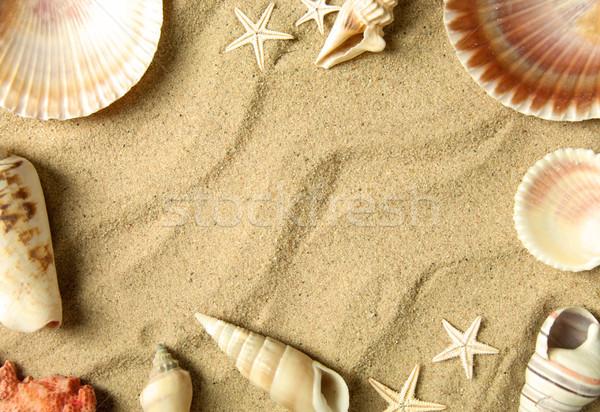 海 シェル フレーム 国境 海浜砂 背景 ストックフォト © unikpix