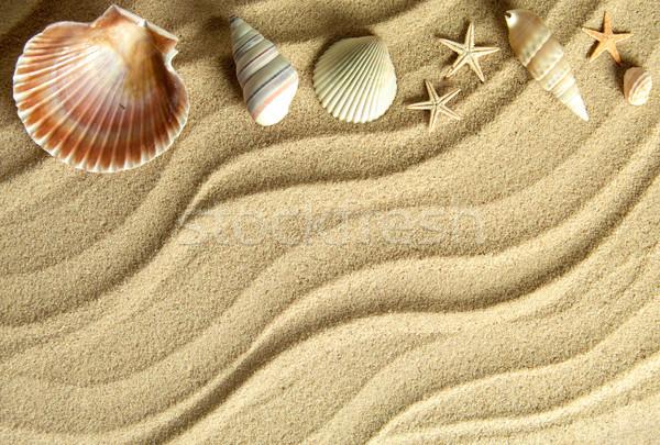 Zee schelpen strand zandstrand ruimte tekst Stockfoto © unikpix