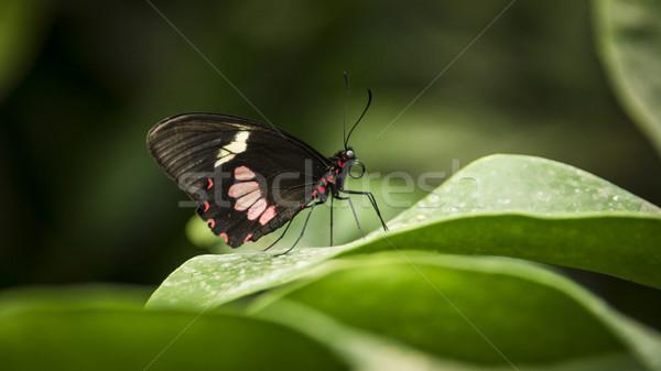 Borboleta folha dobrado asas natureza Foto stock © unkreatives
