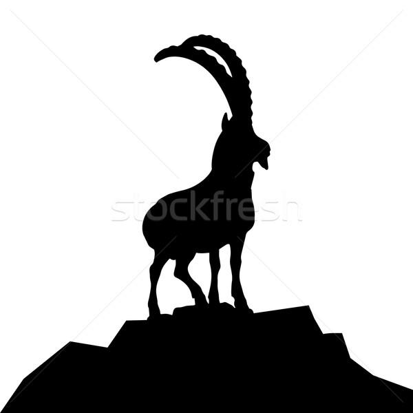 goat hilltop Stock photo © unkreatives