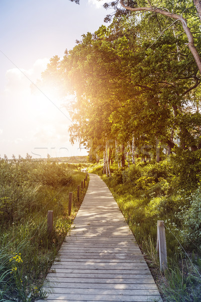 pathway over dunes Stock photo © unkreatives