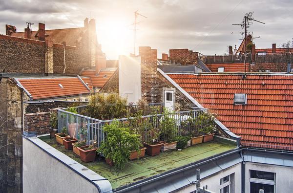 Small rooftop garden Stock photo © unkreatives