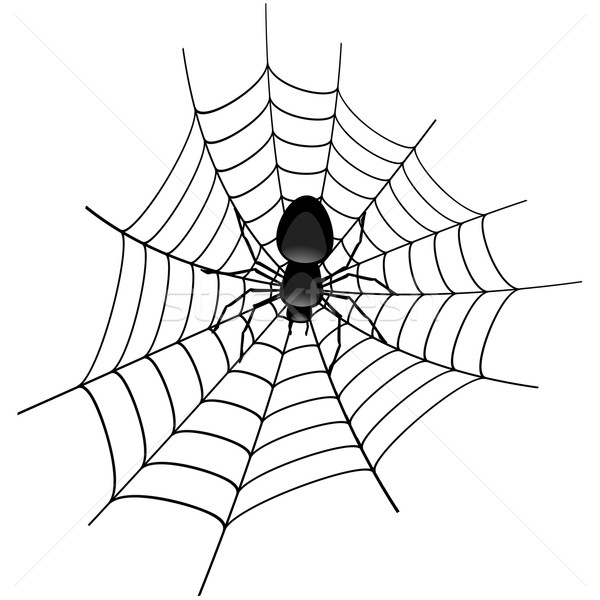 spider in a cobweb vector illustration  u00a9 felix pergande