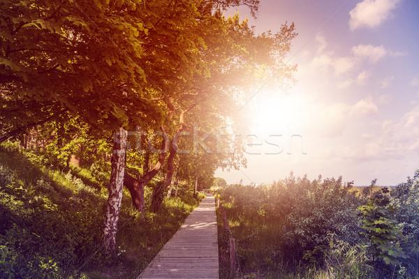 wooden boardwalk Stock photo © unkreatives