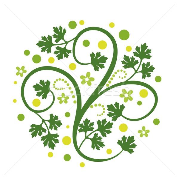 Kwiatowy dekoracji kolendra pozostawia biały trawy Zdjęcia stock © unweit