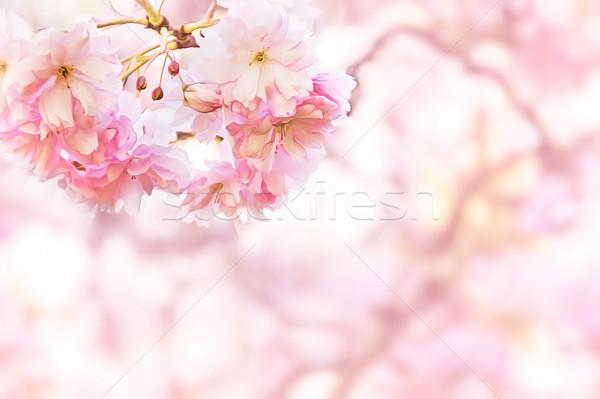Wiosną patrząc ilustracja drzewo charakter Zdjęcia stock © unweit