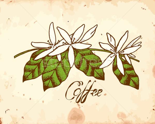 Kawy kwiaty biały grunge beżowy kwiat Zdjęcia stock © unweit