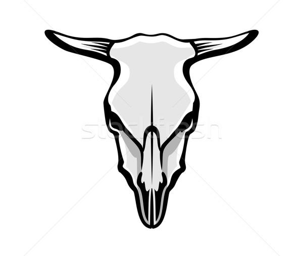 Krów czaszki charakter byka obiektu szkielet Zdjęcia stock © unweit