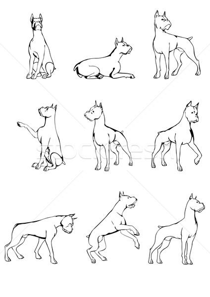 Köpek ayarlamak boksör dokuz köpekler farklı Stok fotoğraf © unweit