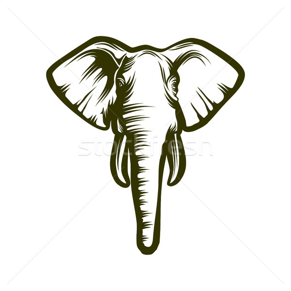 Kafa afrika fil fil beyaz dizayn portre Stok fotoğraf © unweit