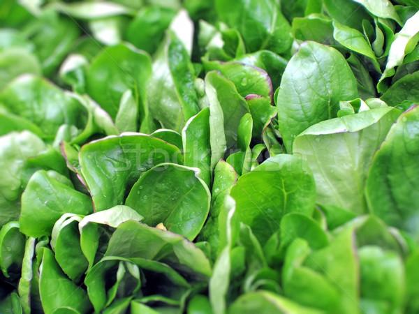 Yaprakları taze yeşil pazar doğa yaprak Stok fotoğraf © unweit