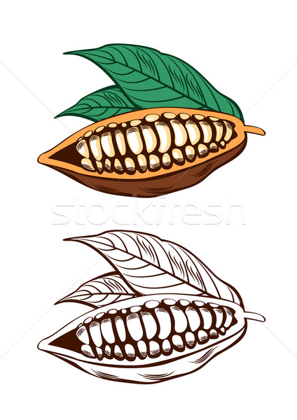 Illustration feuilles vertes alimentaire chocolat sombre Photo stock © unweit