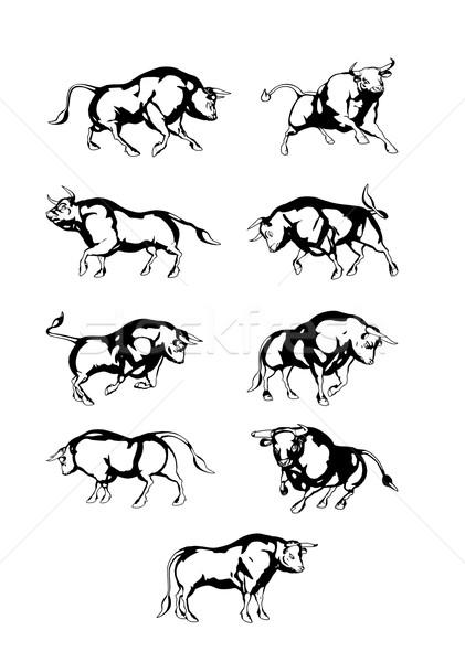 Photo stock: Bull · neuf · différent · boeuf · vecteur · isolé