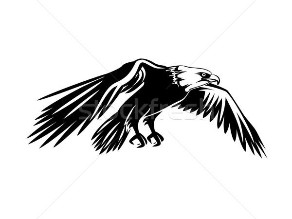 Photo stock: Battant · chauve · aigle · isolé · blanche · oiseaux