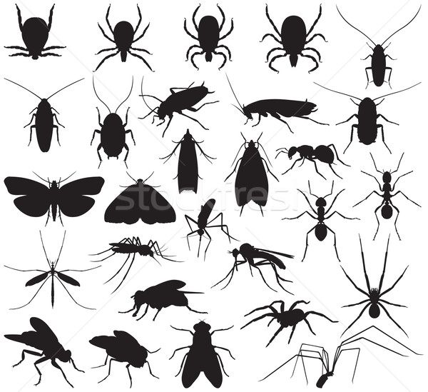 Silhouette household pests Stock photo © UrchenkoJulia
