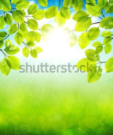 夏 日 風景 緑の葉 春 木材 ストックフォト © user_10003441