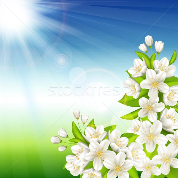 Flowering cherry Stock photo © user_10003441