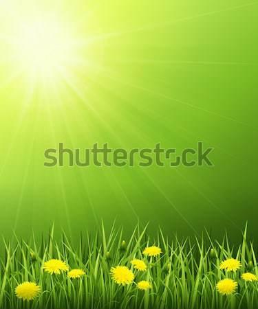 Zonne landschap zomer heldere zon voorjaar Stockfoto © user_10003441