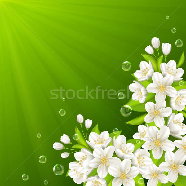 Foto stock: Rama · cereza · floración · primavera