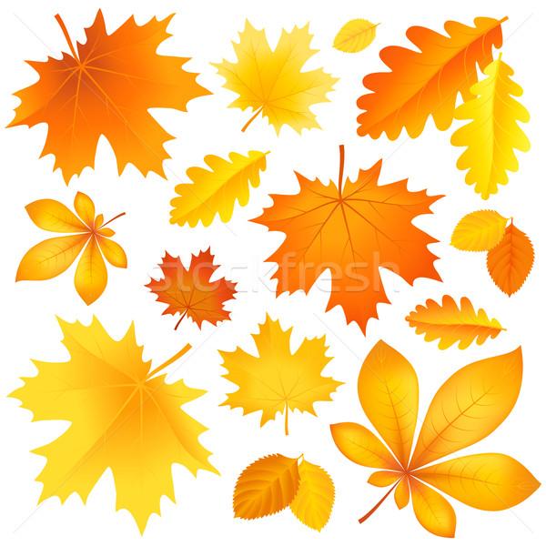 Set autumn leaves Stock photo © user_10003441