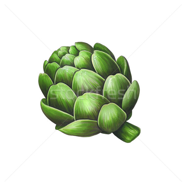 Artichoke on a white background. Sketch done in alcohol markers Stock photo © user_10003441