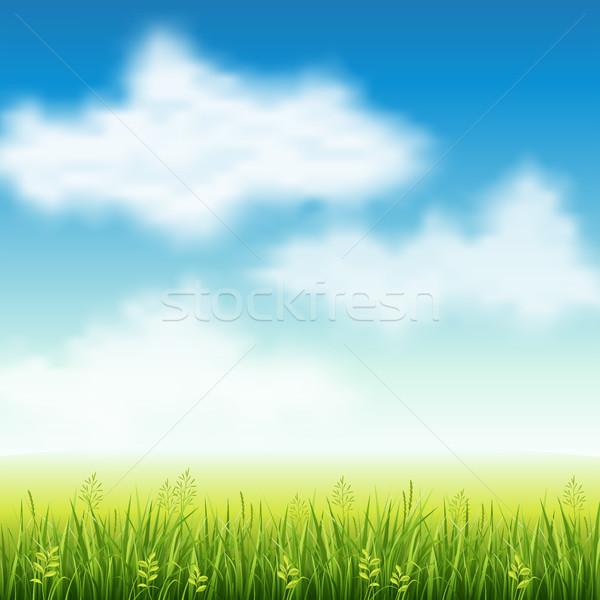 夏 フィールド 草 フィールド 空 自然 ストックフォト © user_10003441