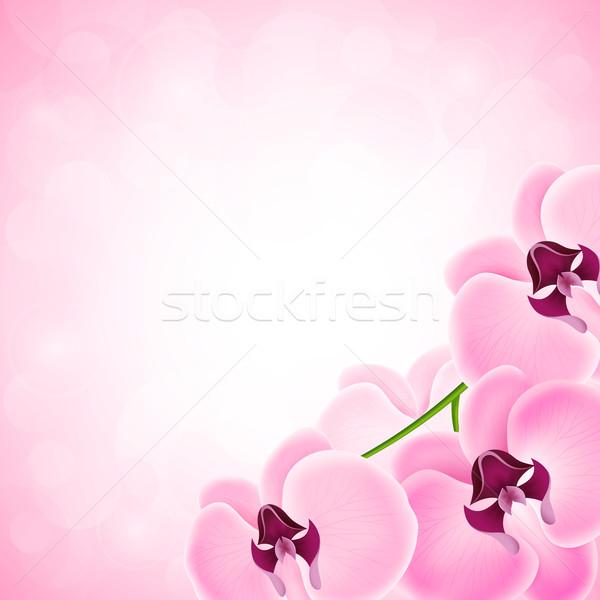 Foto stock: Orquídea · belo · orquídeas · textura · fundo · verão