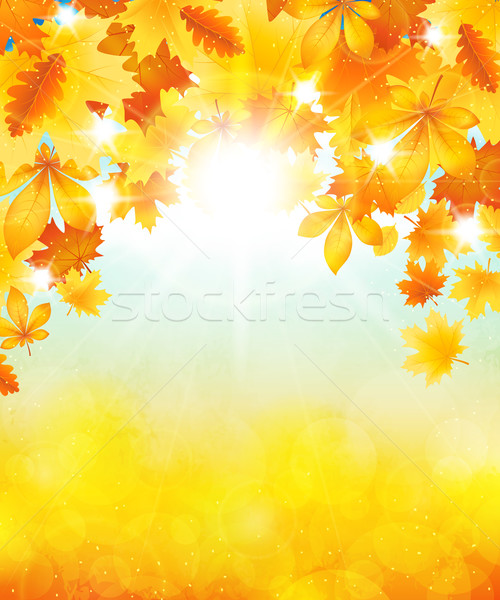 秋 太陽 木 黄色 葉 空 ストックフォト © user_10003441