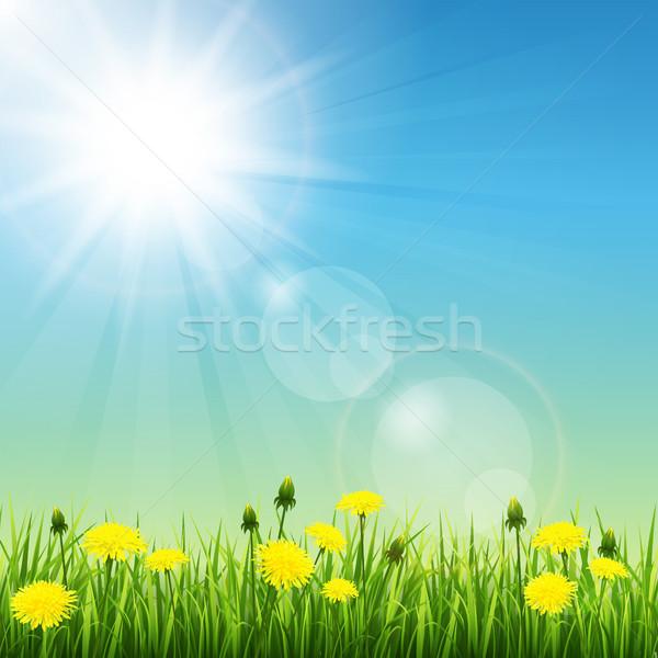Summer meadow Stock photo © user_10003441