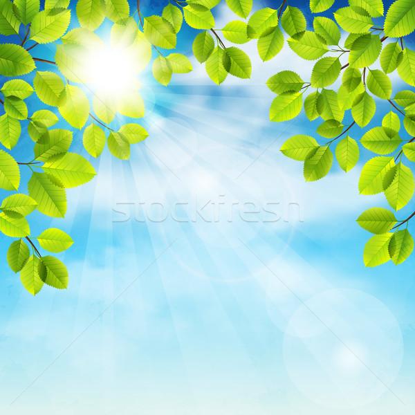 夏 ツリー 青空 春 木材 ストックフォト © user_10003441