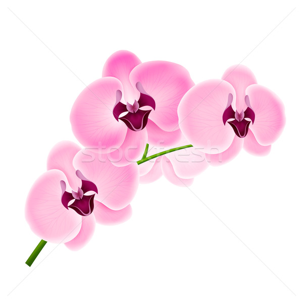 Branch orchids Stock photo © user_10003441