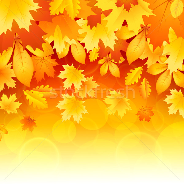 Background of leaves Stock photo © user_10003441